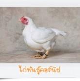 cornish-hen_1